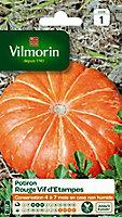 Graines de Potiron Rouge Vif d'Etampes Vilmorin