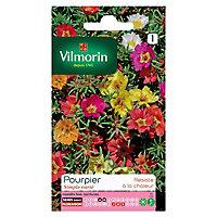 Graines de Pourpier Grande Fleur Simple Varié Vilmorin