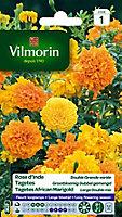Graines de Rose d'Inde Double Grande Variée Vilmorin