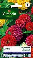 Graines de Zinnia à Fleur Monstrueuse Varié Vilmorin