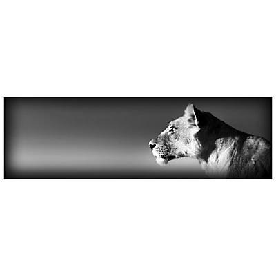 Impression Sur Verre Lionne 97 X 31 Cm Castorama