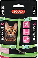 Kit sellerie pour chat vert