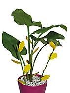 Piège englué floral pour plantes d'intérieures Biotop (6 tiges et 12 plaques)