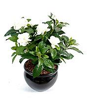 Pot Gardenia artificiel