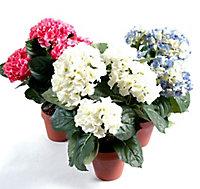 Pot Hortensia artificiel 5 têtes