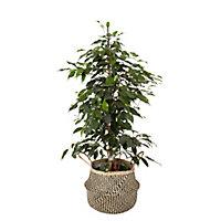 Pot rond herbes marines noir pour pot de 24cm