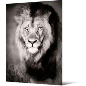 toile lion 65 x 90 5 cm castorama. Black Bedroom Furniture Sets. Home Design Ideas