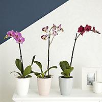 Voir Plantes details