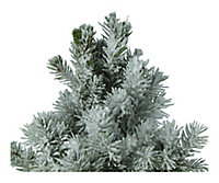 Sapin avec pot en zinc 13 cm