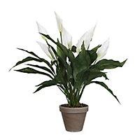Spathiphyllum blanc artificiel ø40 x h.50 cm en pot Stan gris ø11,5cm