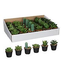 Succulente artificiel en pot vert 6 assorti ø7 x h.11 cm