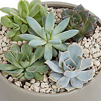 Succulente, jardinière ronde 20cm