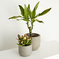 Succulentes et cactus, assortiment, 9cm