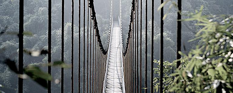 Tableau En Verre Pont De Singe 50 X 125 Cm Castorama