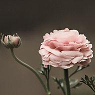 Verre imprimé Glassart bouton de fleurs 30x30cm