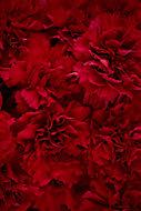 Verre imprimé Glassart œillets rouge 45x65cm