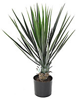 Yucca Rostrata artificiel h.60 cm