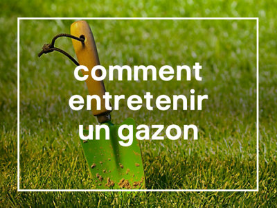 Comment entretenir un gazon